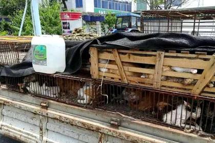 ВКитайской народной республике  арестован владелец 500 кошек