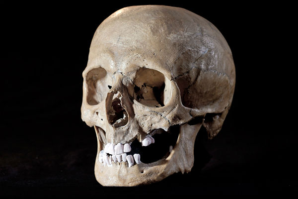 Руководство eBay запретило продажу человеческих черепов и останков