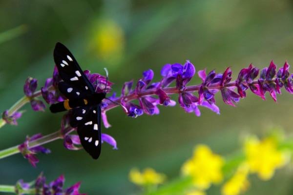 Бабочки появились наЗемле на7 млн лет раньше, чем цветы— Ученые