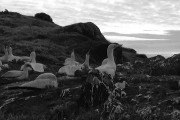 Погибла самая одинокая вмире птица