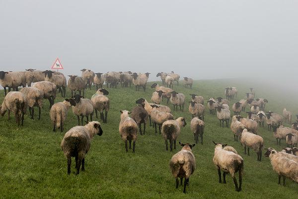 Поезд раздавил оставленное без присмотра стадо из17 овец