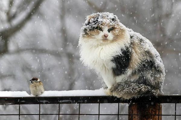 Врайоне Приамурья, где снегопад нарушил электроснабжение, ввели режимЧС