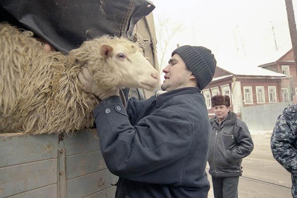 Жертвоприношения вКурбан-байрам откажутся считать издевательством над животными