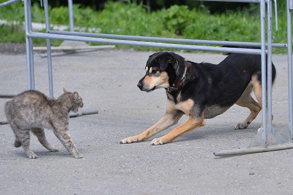 Ученый изсоедененных штатов обвинил кошек исобак в мировом потеплении