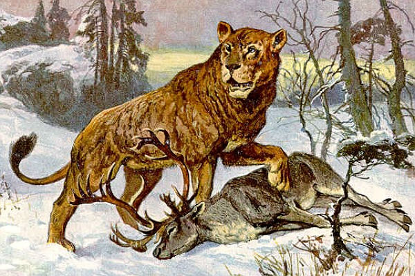 ВЯкутии отыскали  превосходно  сохранившиеся останки пещерного льва