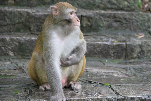 Ученые заставили обезьян воспроизвести «Гамлета» силой мысли