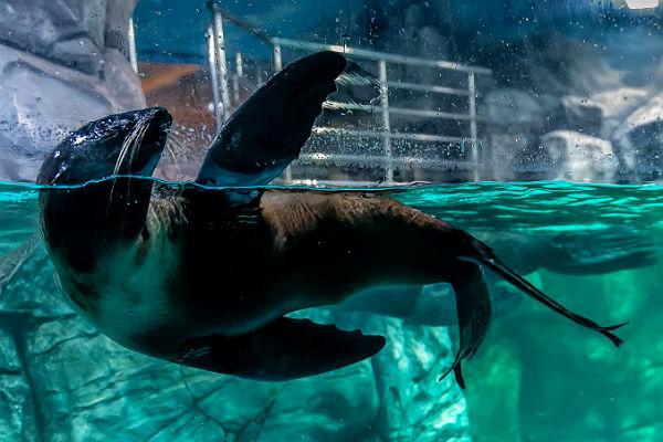 ВПетербурге взломщика дельфинария задержал морской котик