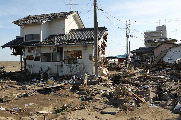 Дикие кабаны ссемьями заселяются вгородах около «Фукусимы»