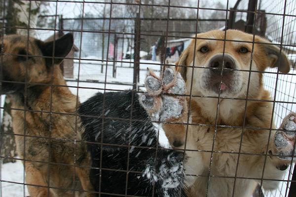Впожаре вприюте для животных насеверо-востоке столицы погибли 13 собак