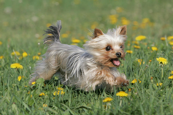 Украинский суд постановил разделить собаку между бывшими супругами