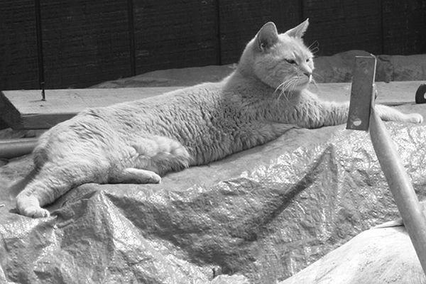 Скончался кот-мэр города наАляске