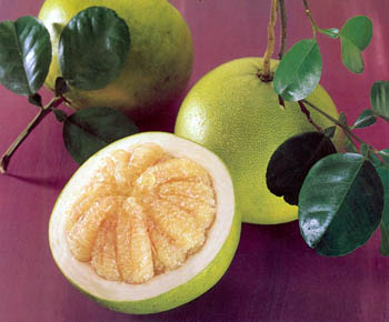 Cхожим действием обладает собратгрейпфрута – помело.