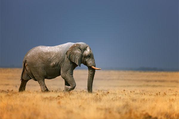 Image result for парке Крюгера слонов